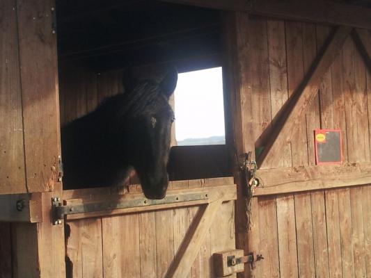 Ugadera hiver 2012, en pension à l'élevage