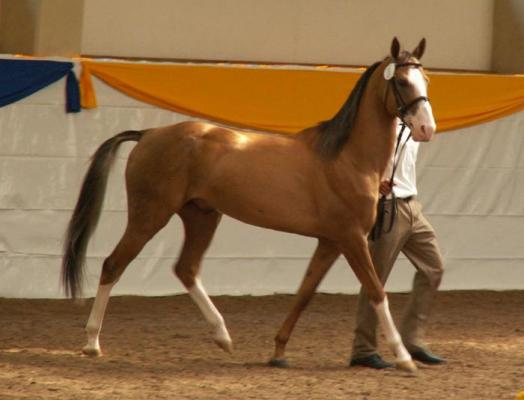 Ashbad Championnat d'Europe show Ising (Allemagne) 2005