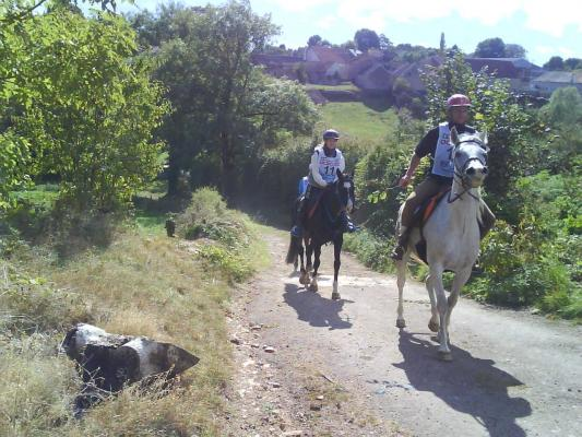 Course d'endurance 90 km (Vitteaux)