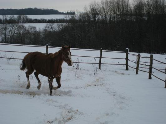 Ptolemee hiver 2011